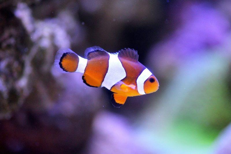 clown fish at the lake district aquarium
